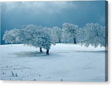 Winter Wonderland Canvas Print by Flavia Westerwelle