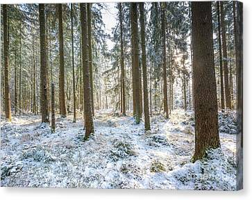 Canvas Print featuring the photograph Winter Wonderland by Hannes Cmarits