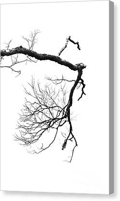Canvas Print featuring the photograph Wintered Over by Skip Willits