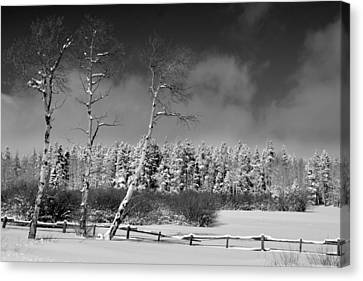 Canvas Print featuring the photograph Winters Allure.. by Al Swasey