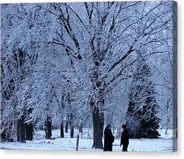 Winters Beauty Canvas Print by Dave Clark
