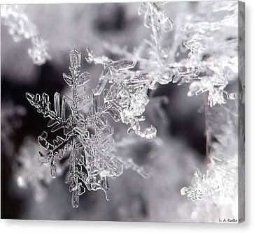 Winter's Beauty Canvas Print by Lauren Radke