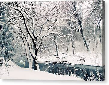 Swans... Canvas Print - Winter's Charm by Jessica Jenney