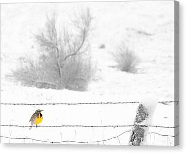 Canvas Print featuring the photograph Winters Color by Al Swasey