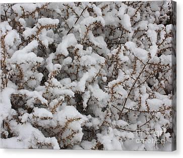 Winter's Contrast Canvas Print by Carol Groenen
