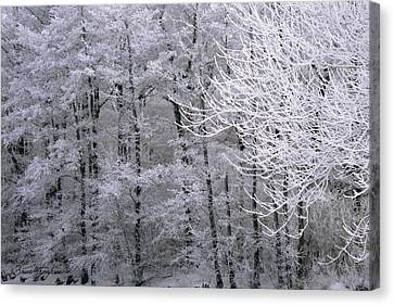 Winter's Down Canvas Print by Bruce Thompson