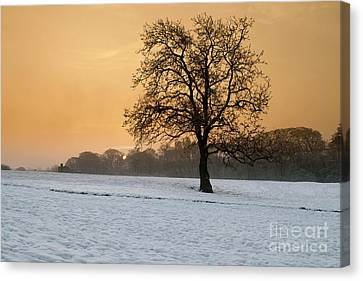 Winters Morning Canvas Print by Nichola Denny