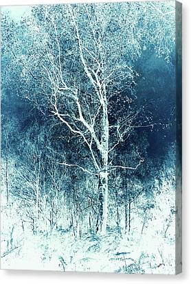 Winter's Peace Canvas Print by Callan Percy