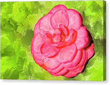 Winter's Rose - The Camellia Canvas Print