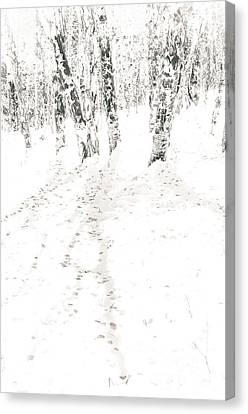 Canvas Print featuring the photograph Winter's Shadows by The Forests Edge Photography - Diane Sandoval