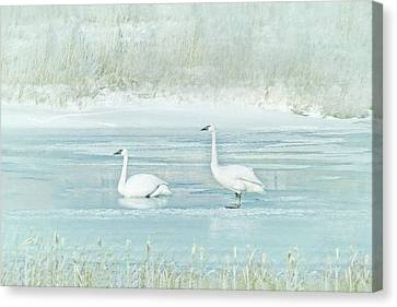 Canvas Print featuring the photograph Trumpeter Swan's Winter Rest Blue by Jennie Marie Schell