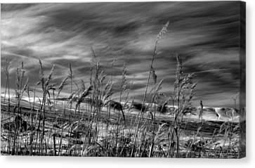 Canvas Print featuring the photograph Winters Wheat by Al Swasey