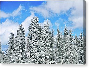Winterscape Canvas Print by Jeff Kolker