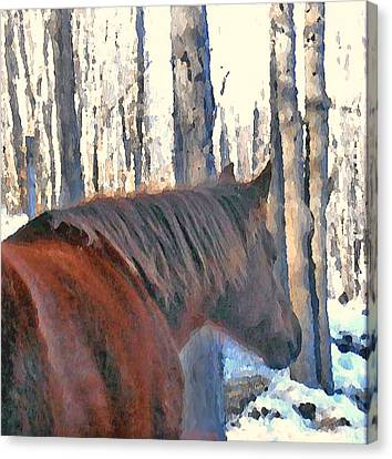 Canvas Print - Wintertime Moments With The Paso Fino Mare by Patricia Keller