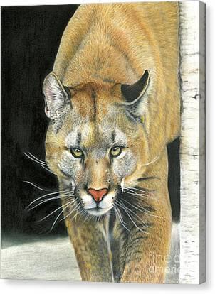 Wintertime Prowler Canvas Print