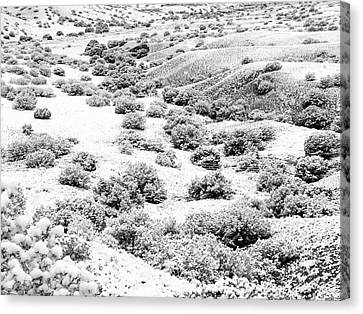 Wintry Day In The High Mountain Desert Canvas Print by Mary Lee Dereske