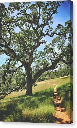 Oak Canvas Print - Wipe Away Those Tears by Laurie Search