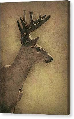Wisconsin White Tail Buck Sketch Canvas Print by Jack Zulli
