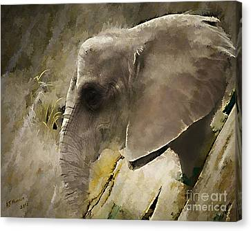 Pittsburgh Zoo Canvas Print - Wisdom by Arne Hansen
