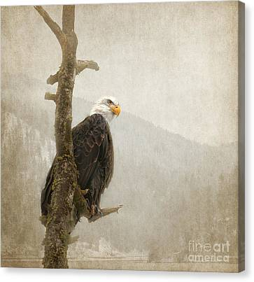 Wisdom Canvas Print by Beve Brown-Clark Photography