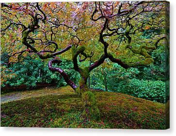 Wisdom Tree Canvas Print by Jonathan Davison
