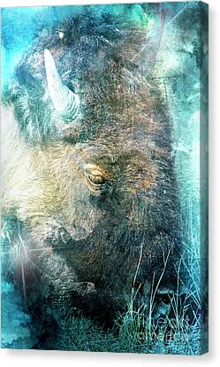 Wise Beast Canvas Print