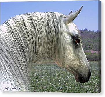 Canvas Print featuring the digital art Wise Grey Mare by Jayne Wilson