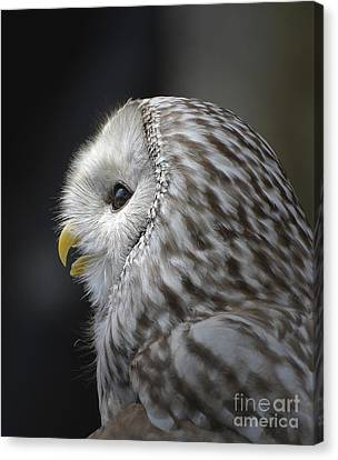 Wise Old Owl Canvas Print by Kathy Baccari