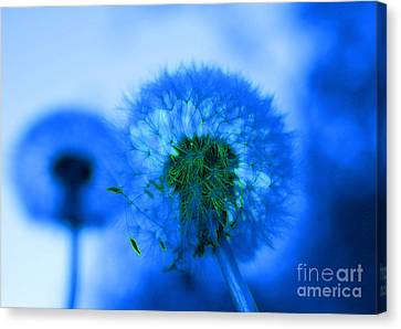 Wish Away The Blues Canvas Print by Valerie Fuqua