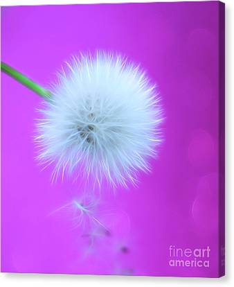 Wish Of Summer Canvas Print