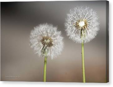Canvas Print featuring the photograph Wish On Me by Lora Lee Chapman