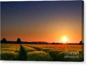 Cornfield Canvas Print - Wish You Were Here by Franziskus Pfleghart