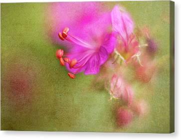 Macro Geranium Flower Canvas Print - Wisp Of Spring by Sharon Johnstone