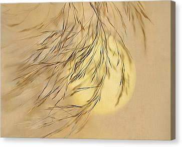 Wispy Sunset-2 Canvas Print