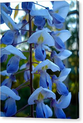 Wisteria - Blue Hooded Ladies Canvas Print