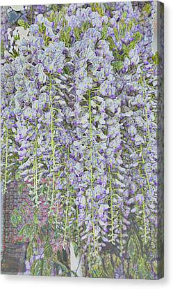 Canvas Print featuring the photograph Wisteria Before The Hail by Nareeta Martin