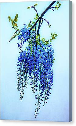 Canvas Print featuring the photograph Wisteria by Chris Lord