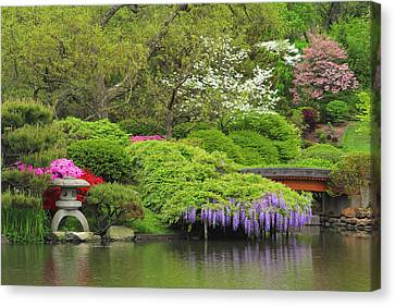 Wisteria In Bloom Canvas Print - Wisteria In A Japanese Garden by Greg Matchick