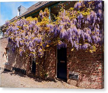 Limburg Canvas Print - Wisteria Over A Doorway In Old Town Maastricht Netherlands by Louise Heusinkveld