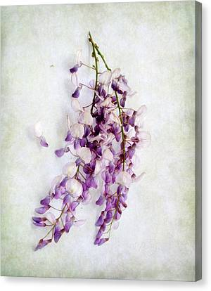 Canvas Print featuring the photograph Wisteria Still Life by Louise Kumpf