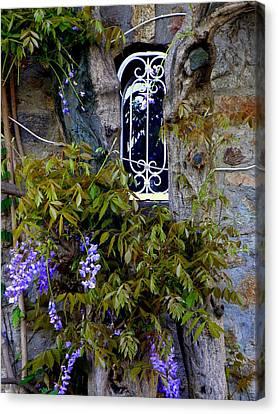 Wisteria Window Canvas Print