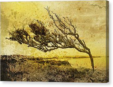 With The Flow Canvas Print by Gareth Davies