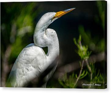 Canvas Print featuring the photograph White Egret 2 by Christopher Holmes
