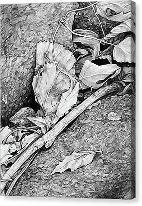 Canvas Print featuring the drawing Withered Leaves by Aaron Spong