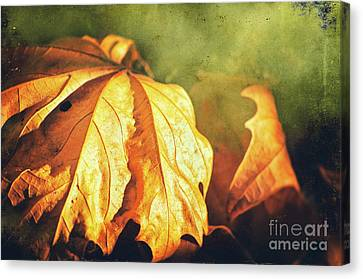 Withered Leaves Canvas Print