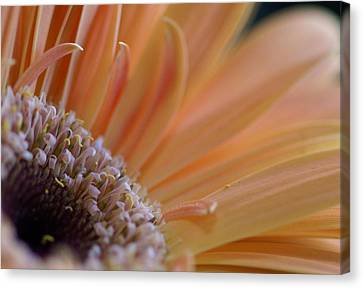 Within Nature Canvas Print by Patricia M Shanahan