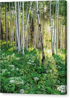 Canvas Print featuring the photograph Within The Forest Deep by Tim Reaves