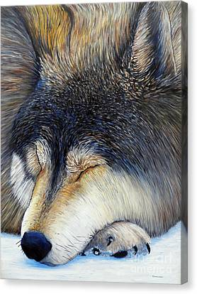 Wolf Dreams Canvas Print by Brian  Commerford