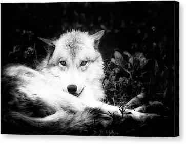 Wolf Grin Canvas Print