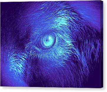 Canvas Print featuring the painting Wolf In Blue by David Mckinney